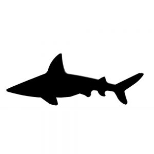 Brooch Silhouette Shark Made With Acrylic by JOE COOL